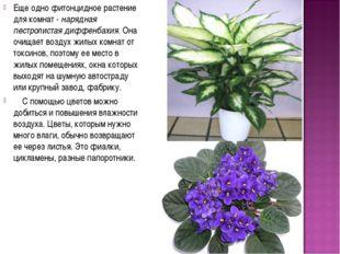 Еще одно фитонцидное растение для комнат - нарядная пестролистая диффенбахия.
