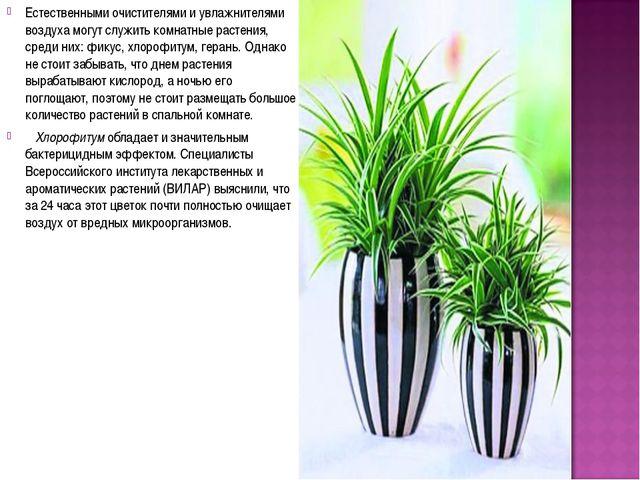 Естественными очистителями и увлажнителями воздуха могут служить комнатные ра...