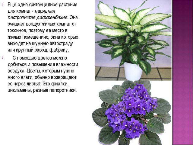 Еще одно фитонцидное растение для комнат - нарядная пестролистая диффенбахия....