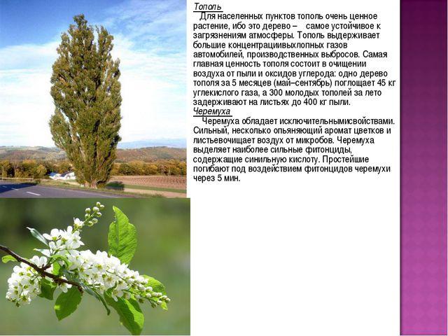 Тополь Для населенных пунктов тополь очень ценное растение, ибо это дерево –...