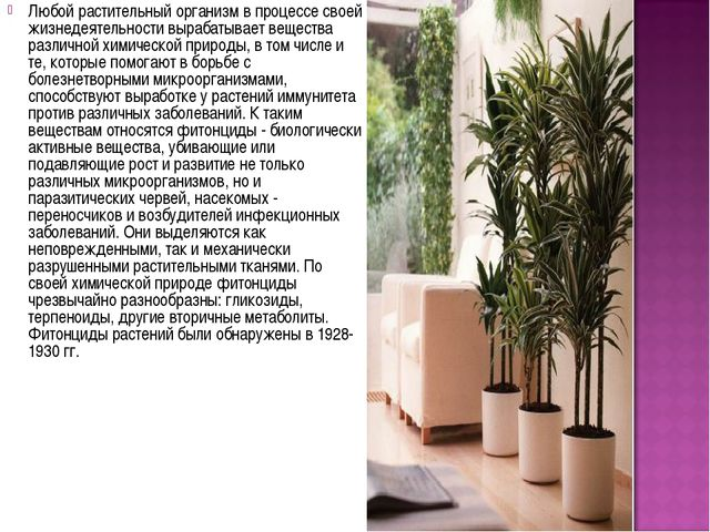 Любой растительный организм в процессе своей жизнедеятельности вырабатывает в...
