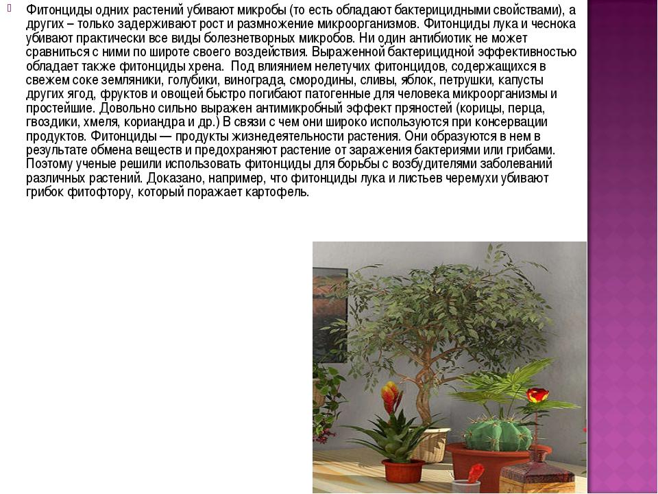 Фитонциды одних растений убивают микробы (то есть обладают бактерицидными сво...