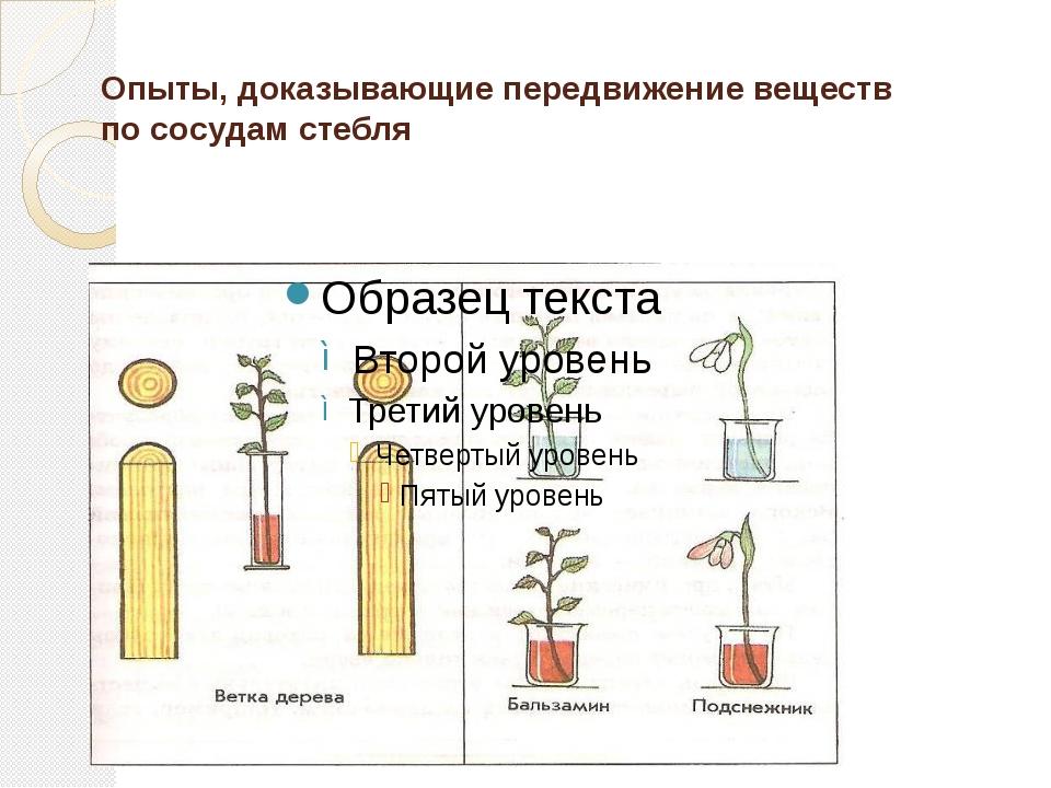 Опыты, доказывающие передвижение веществ по сосудам стебля
