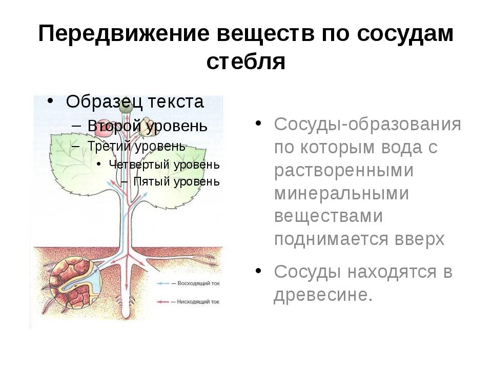 Передвижение веществ по сосудам стебля Сосуды-образования по которым вода с р...