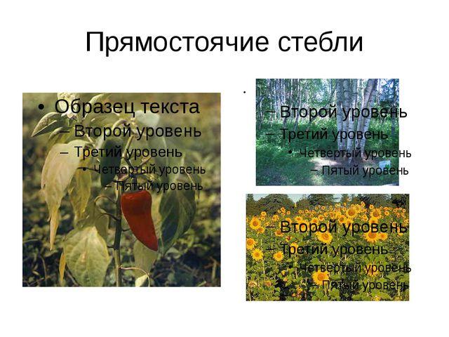 Прямостоячие стебли