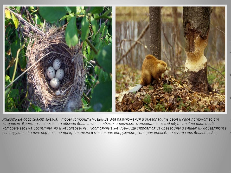 Животные сооружают гнёзда, чтобы устроить убежище для размножения и обезопаси...