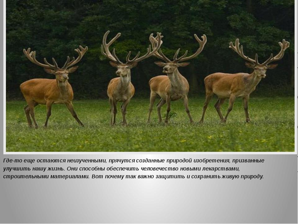 Где-то еще остаются неизученными, прячутся созданные природой изобретения, пр...