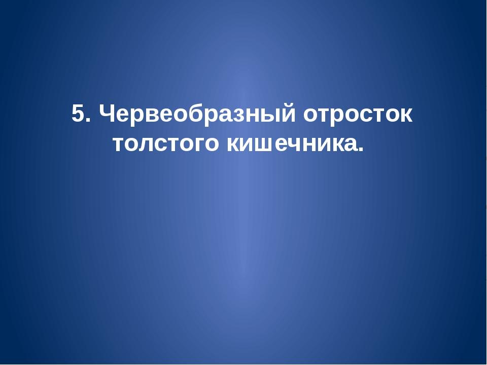 5. Червеобразный отросток толстого кишечника.