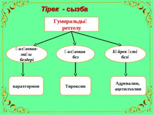 Тірек - сызба