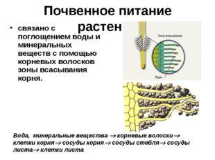 Почвенное питание растений связано с поглощением воды и минеральных веществ с
