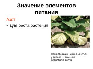 Значение элементов питания Азот Для роста растения Пожелтевшие нижние листья
