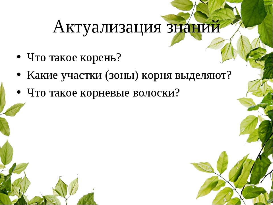 Актуализация знаний Что такое корень? Какие участки (зоны) корня выделяют? Чт...