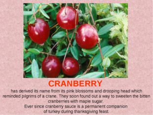 CRANBERRY has derived its name from its pink blossoms and drooping head whic