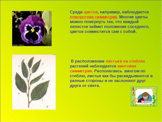 Среди цветов, например, наблюдается поворотная симметрия. Многие цветы можно...