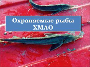 Охраняемые рыбы ХМАО
