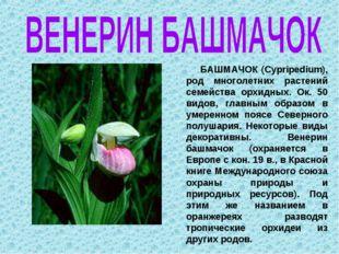 БАШМАЧОК (Cypripedium), род многолетних растений семейства орхидных. Ок. 50