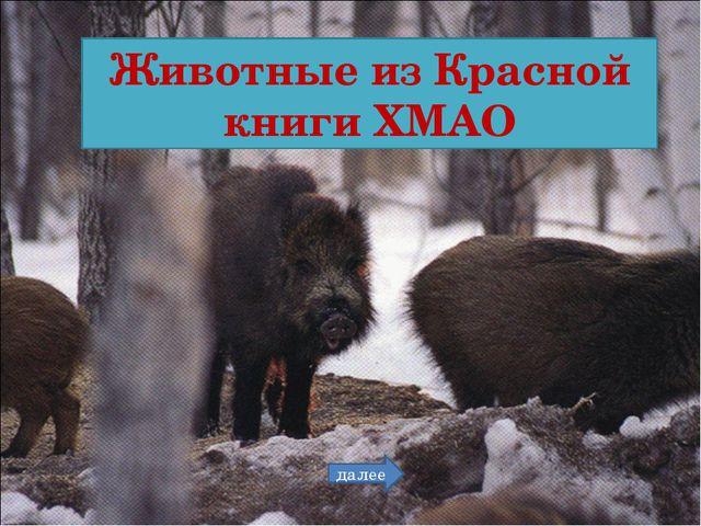Животные из Красной книги ХМАО далее