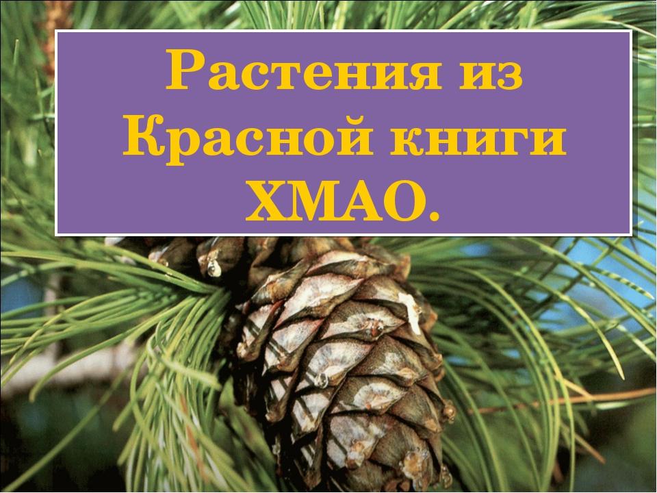 Растения из Красной книги ХМАО.
