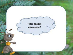 Что такое хвоинки?