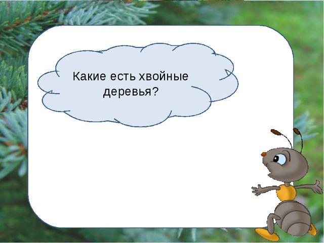 Какие есть хвойные деревья?