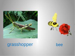 grasshopper bee