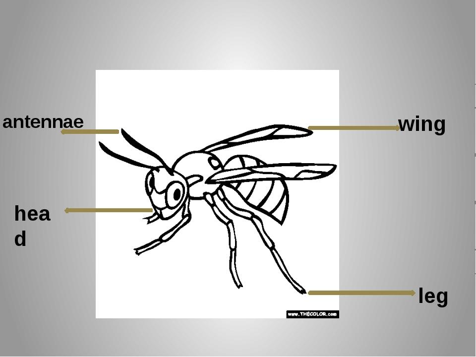 wing leg antennae head