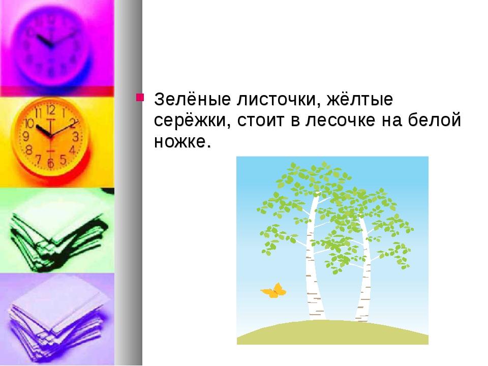Зелёные листочки, жёлтые серёжки, стоит в лесочке на белой ножке.
