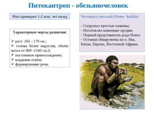 Питекантроп - обезьяночеловек Жил примерно 1-2 млн. лет назад Характерные чер