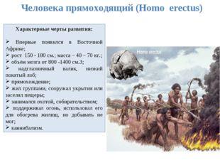 Человека прямоходящий (Homo erectus) Характерные черты развития: Впервые появ