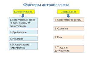 Факторы антропогенеза Биологические Социальные 1. Естественный отбор на фоне