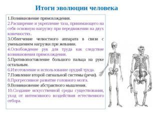 Итоги эволюции человека 1.Возникновение прямохождения. 2.Расширение и укрепле