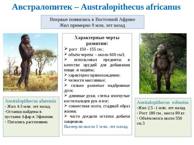 Австралопитек – Australopithecus africanus Впервые появились в Восточной Афри...