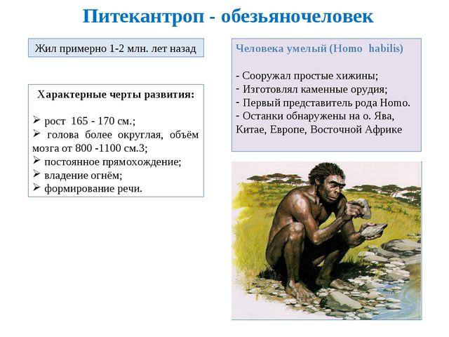 Питекантроп - обезьяночеловек Жил примерно 1-2 млн. лет назад Характерные чер...