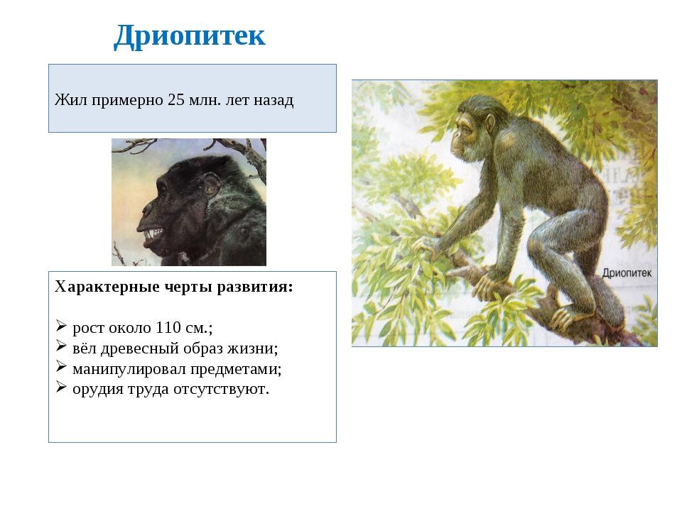 Дриопитек Жил примерно 25 млн. лет назад Характерные черты развития: рост око...