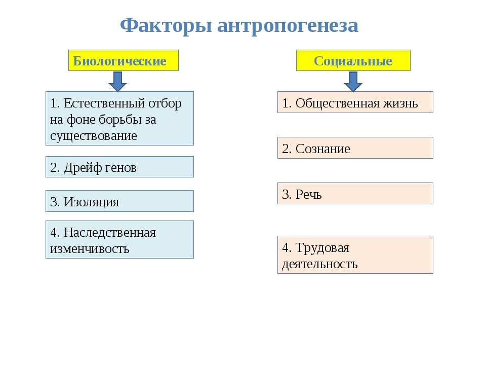 Факторы антропогенеза Биологические Социальные 1. Естественный отбор на фоне...