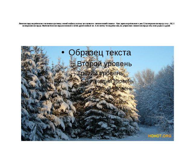 Летом кислород вырабатывают лиственные растения, а зимой хвойные, поэтому ле...