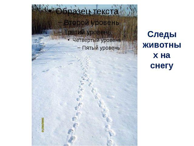 Следы животных на снегу