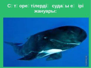 Сүтқореқтілердің судағы ең ірі жануары: