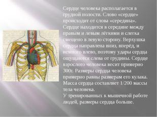 Сердце человека располагается в грудной полости. Слово «сердце» происходит о