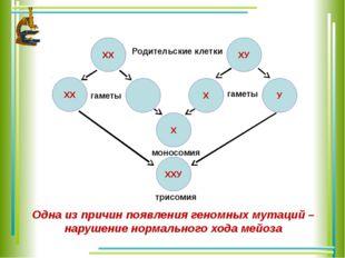 ХХ ХХ ХУ У Х ХХУ Х Родительские клетки гаметы гаметы моносомия трисомия Одна