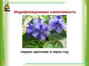 Модификационная изменчивость первое цветение и через год