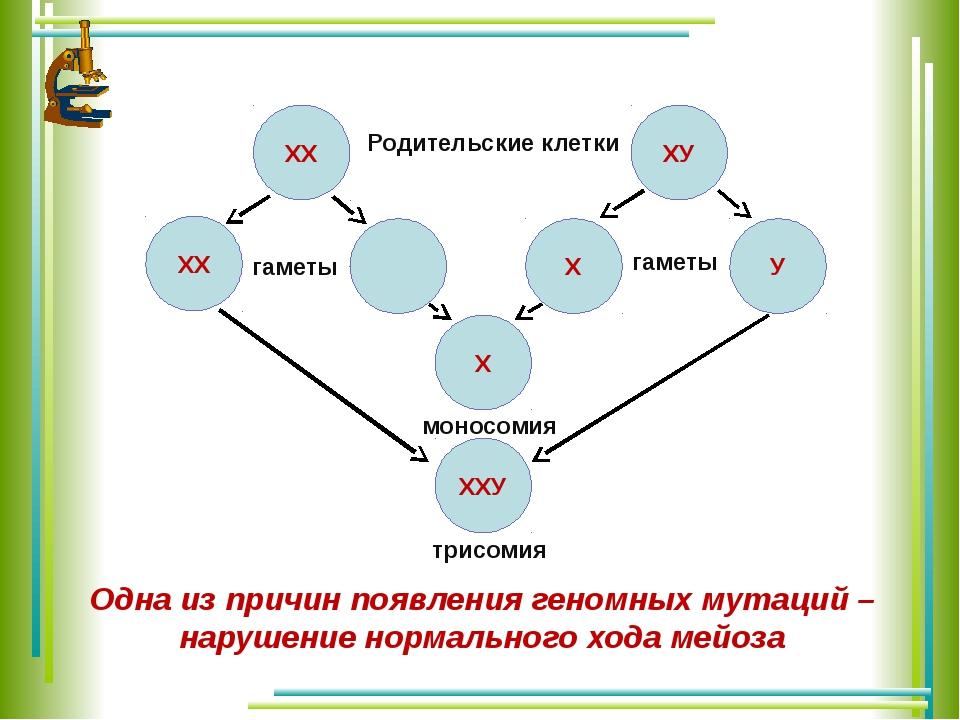 ХХ ХХ ХУ У Х ХХУ Х Родительские клетки гаметы гаметы моносомия трисомия Одна...