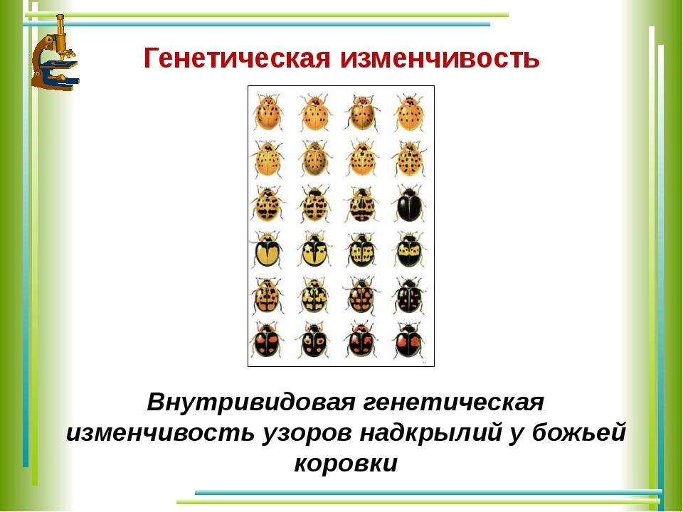 Внутривидовая генетическая изменчивость узоров надкрылий у божьей коровки Г...