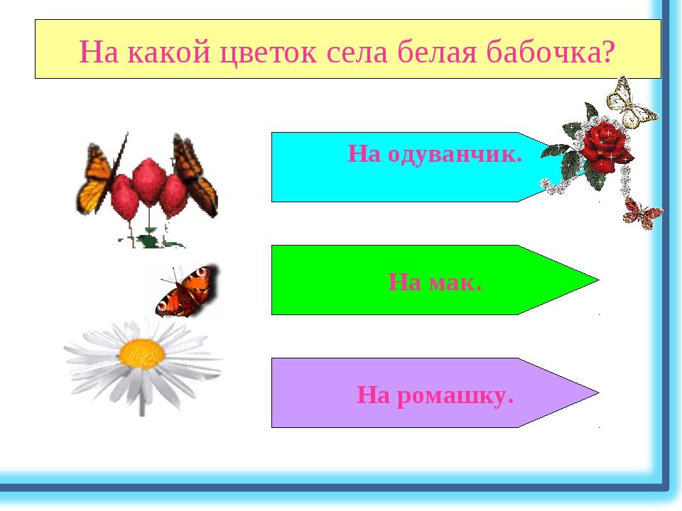 На какой цветок села белая бабочка? На мак. На ромашку. На одуванчик.