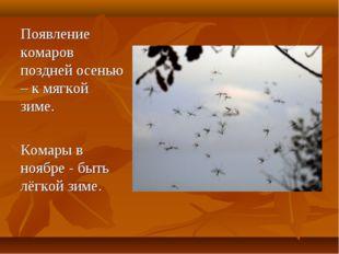 Появление комаров поздней осенью – к мягкой зиме. Комары в ноябре - быть лёг