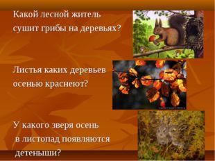Какой лесной житель сушит грибы на деревьях? Листья каких деревьев осенью кра