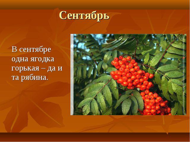 Сентябрь В сентябре одна ягодка горькая – да и та рябина.