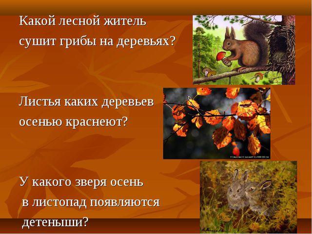 Какой лесной житель сушит грибы на деревьях? Листья каких деревьев осенью кра...