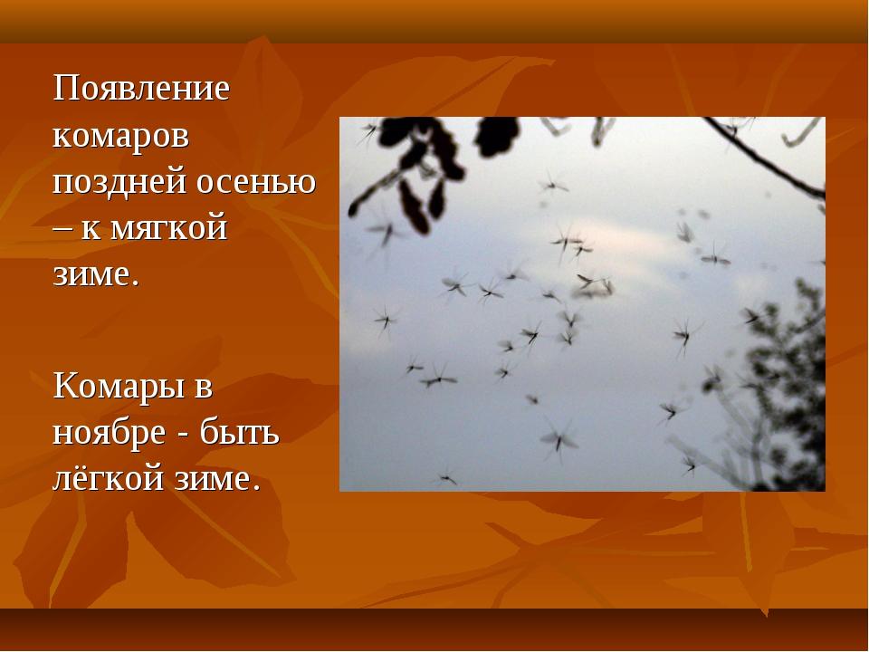 Появление комаров поздней осенью – к мягкой зиме. Комары в ноябре - быть лёг...