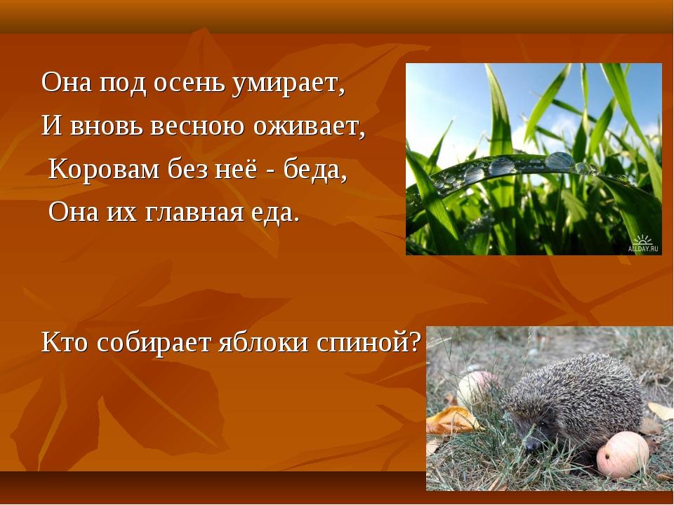 Она под осень умирает, И вновь весною оживает, Коровам без неё - беда, Она их...